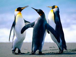 ペンギン画像